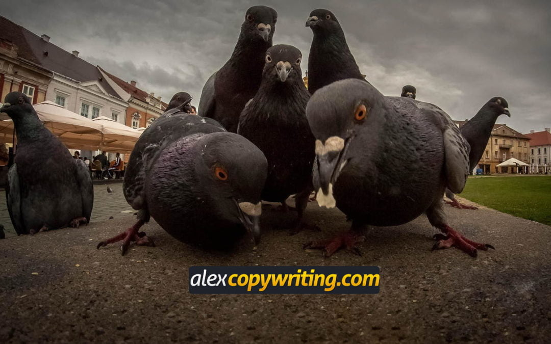 Se equivocó la paloma con su estrategia de marketing de contenidos